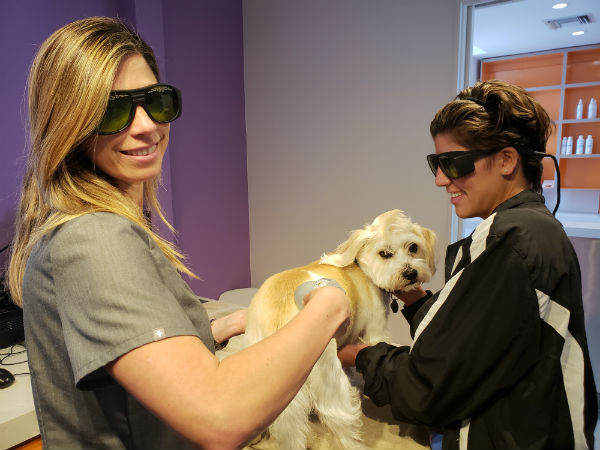 Pet Laser Therapy in South Miami